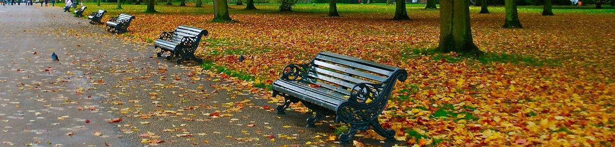 Bogata oferta ławek miejskich i parkowych.